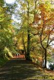 06 Autumn012.JPG
