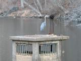 Heron and overflow drain
