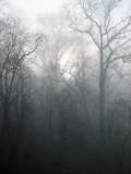 Burning the fog