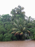 Typical Kerala greenery on the island