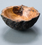 Coral bowl 4.jpg    280