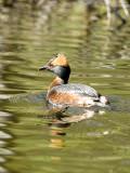 Foto och fågelhelg 20070428-30
