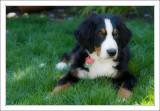 Callie on lawn