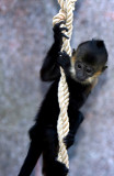 Monkey-ing Around