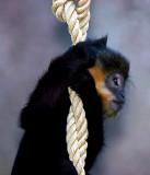 Monkey hangin' around