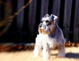 Sammy blur