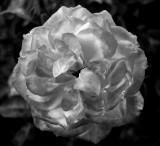 B&W Flower