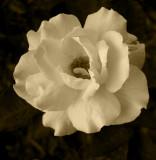 Flower n' sepia