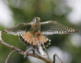Birds in USA & Canada