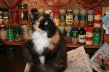 Shadow, supervising the cross word puzzle.