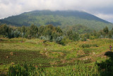 As our trek starts, we approach the lower slopes of Mt. Bisoke, where the Amahoro Group resides.