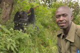 Our UWA ranger poses with the bark-munching silverback in the background.