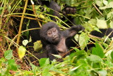 All the while, his mother Rukundo sat right behind intently eating vegetation.