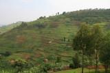 The lush green, cultivated scenery of Rwanda
