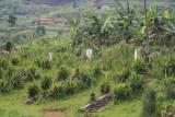 Chinese graves in rural Rwanda