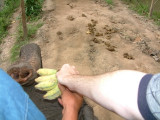 Feeding and Riding an Elephant Near Chiang Mai