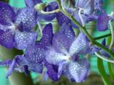 Orchid Plantation