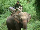 Elephant Near Mae Hong Son
