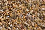 Pebbles on the Potomac River