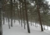 Il respiro della neve