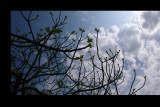 gli alti rami dell'albero di Ivo