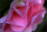 camellia  - free filter link