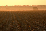 Mainland farm