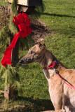 Day 10-Holiday hound
