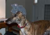 Day 11-Hippo friend
