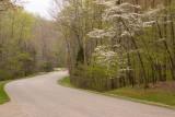 Peaceful road II