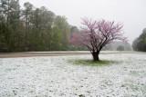 Spring snow!?!?
