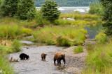 Four Days with Bears