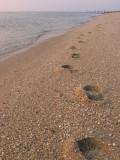 Footprints - Cape May, NJ
