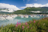 Small Boat Harbor and Fireweed - Valdez, AK