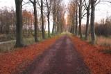November pathway