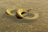 Two drownded tyres