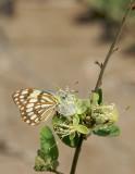 Flutter By  406.jpg