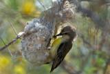 Nice nest  401.jpg