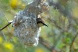 Nice nest  402.jpg