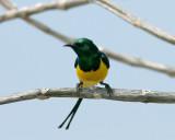 Yellow Green B1rd  407.jpg