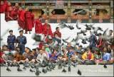 Pigeons , Tshechu Festival