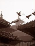 Pigeons 2, Durbar Square, Kathmandu