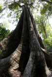 Rain Forest giant at Similan Islands