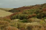 Emigrant Hill 1007 color