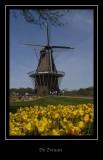 2007 Holland, Michigan, Tulip Festival