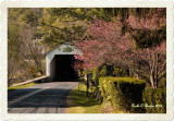 Spring Along Erwinna Covered Bridge