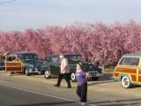 WIV Cruise BlossomTrail (29).JPG