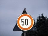 Finch on traffic sign