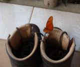 Boots and butterfly