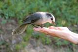 A Bird in Hand